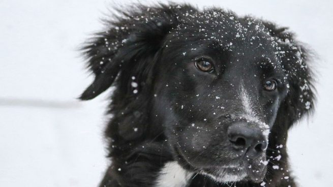 Cómo evitar que el perro tenga frío