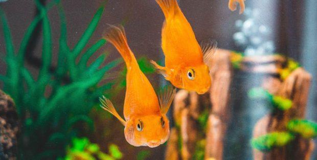 Pegamento en acuario