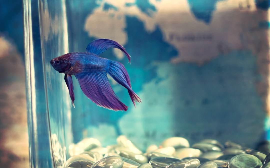 Pegar objetos en acuario