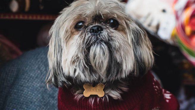 Tips para proteger a tu perro del frío