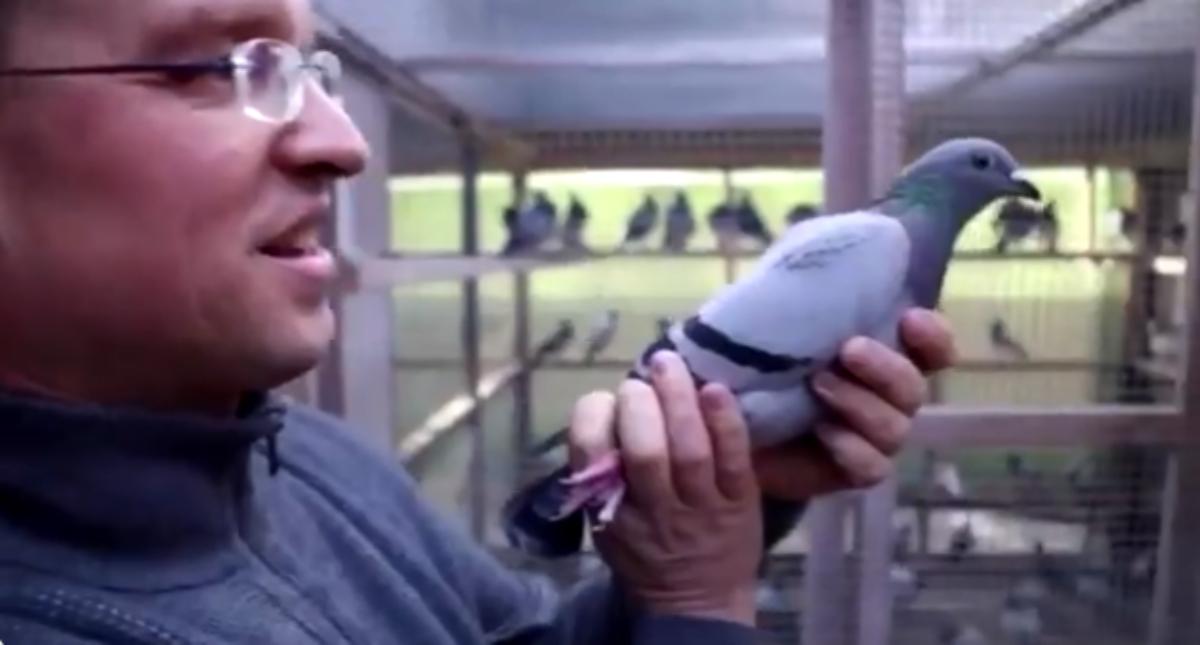 Twitter: Un millonario paga 1.310.000 euros por la paloma más cara del mundo