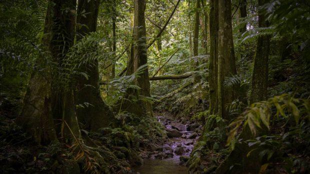 El Amazonas
