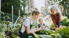 Conoce actividades para mantener a los niños aprendiendo en casa