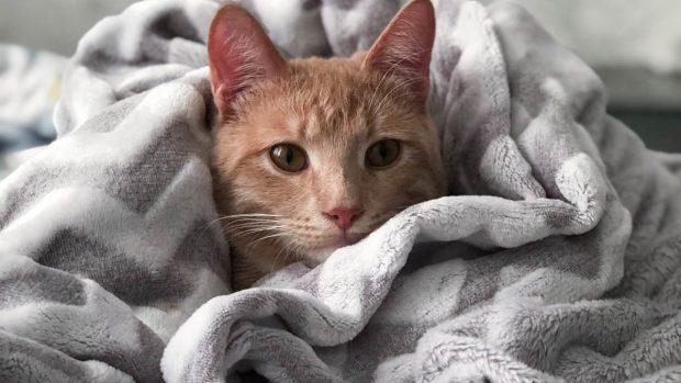 Gato muerde tobillos