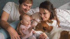 Pautas para una buena relación entre bebés y mascotas