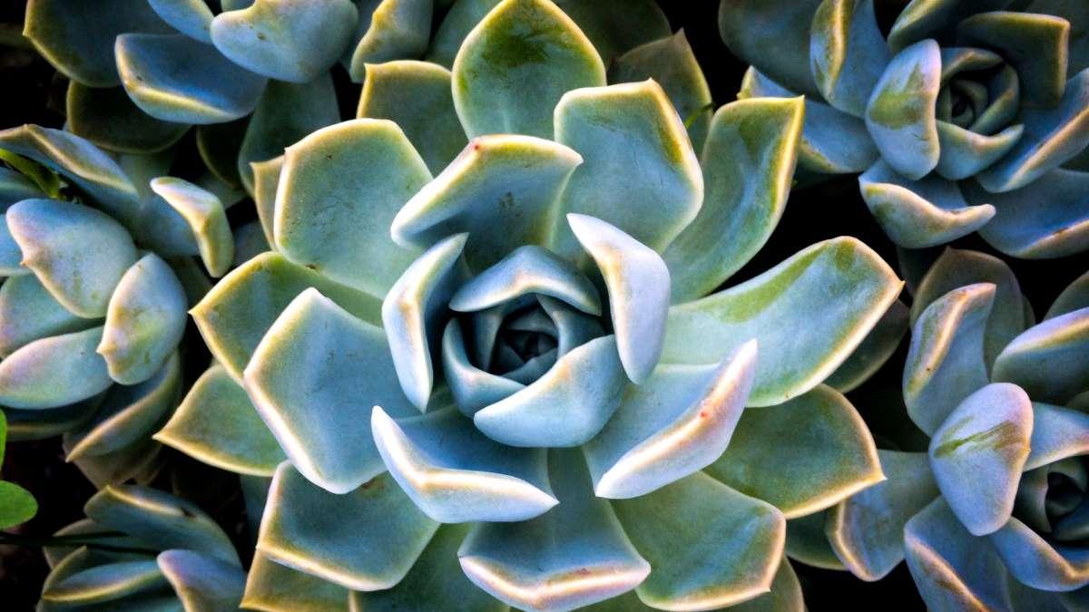 El ágave es una planta a la que se le puede sacar mucho partido