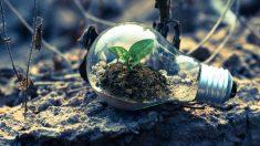 Sostenibilidad y economía verde