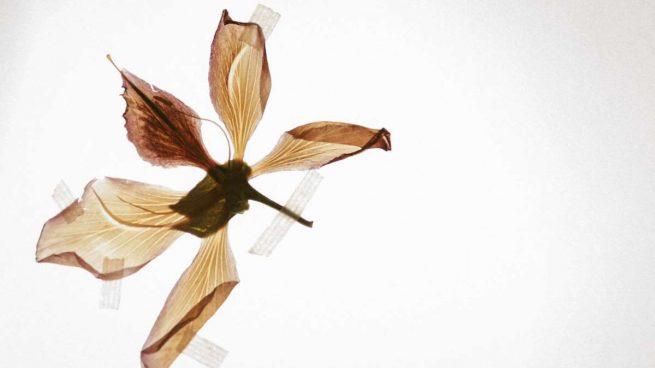 prensar flores
