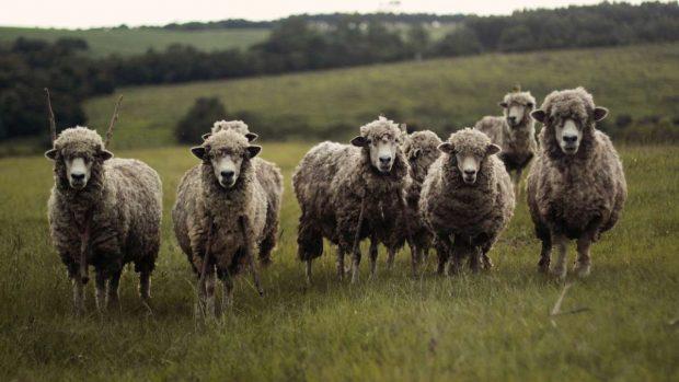 Etología en granja