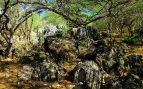 Jardín xerofítico