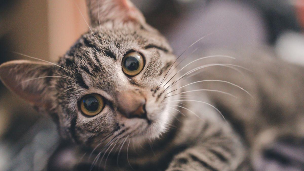 Beneficios de dormir con tu gato