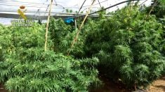 Golpe a la mayor red de marihuana en España. Foto: EP