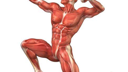 Equilibrio entre músculos