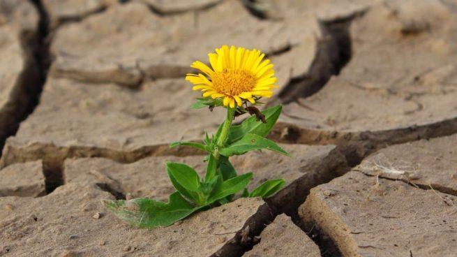 Desierto con flor