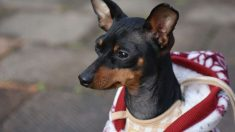 Termorregulación de tu perro