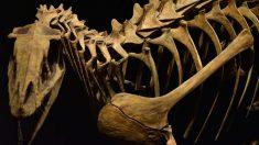 Huellas sobre los animales prehistóricos