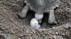 Localización huevos de tortuga