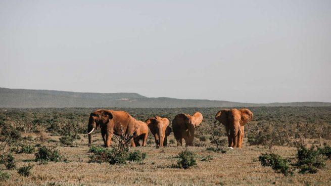 Naturaleza en África