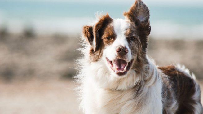 7 consejos básicos para limpiar al perro sin bañarlo