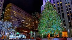 Descubre las curiosidades y últimas noticias sobre el árbol de Navidad del Rockefeller Center
