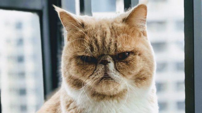 Cómo envejecen los gatos