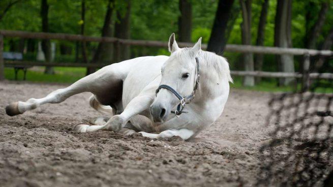 Patologías en caballos