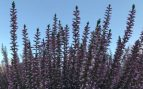 plantas exterior frío