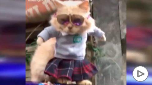 Un profesor de Indonesia arrasa en TikTok diseñando ropa para gatos.