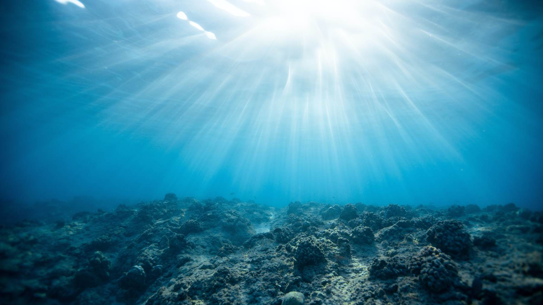 Peces de aguas profundas