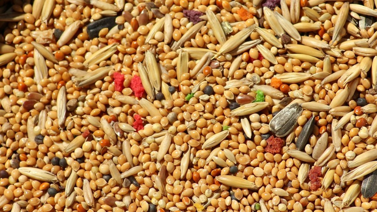 Mijo: propiedades y beneficios de este cereal sin gluten