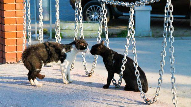 Animales se enfrentan