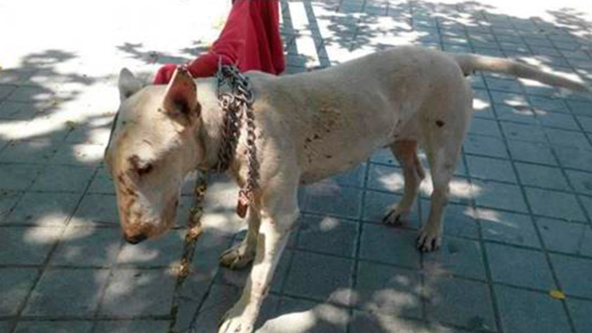 Perro abandonado atado en una calle de Granada.