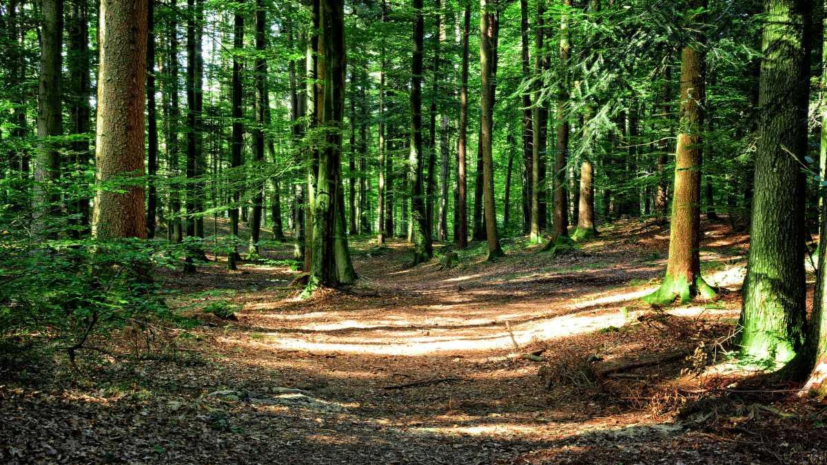 Cómo crear una reserva ambiental