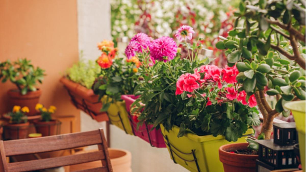 Pasos para proteger de las heladas a las plantas de jardín, balcón o terraza