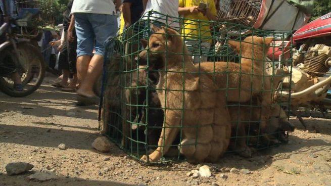 perros china