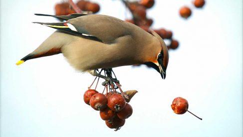 Alimentación de tu pájaro doméstico