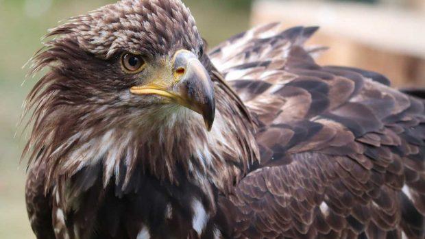 Vista de águila