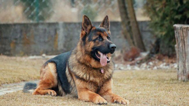 quitar garrapatas en los perros