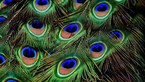 Pigmentación en plumas