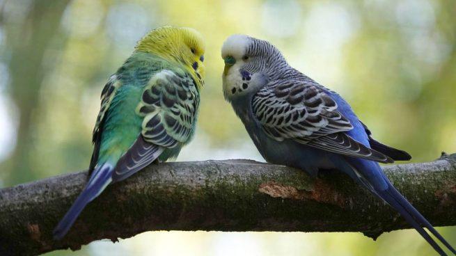 Plumas de pájaro