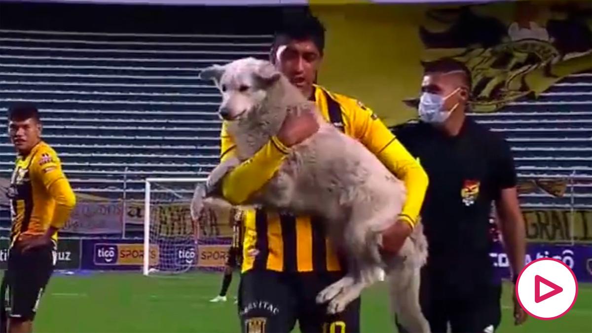 Un perro se cuela en un partido de la liga boliviana y roba una bota.