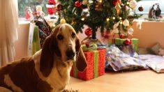 Ideas de regalos para mascotas