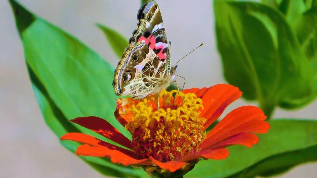 Insectos de colores