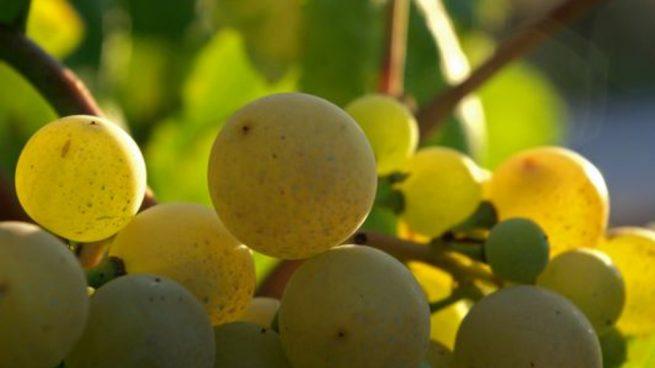 Las uvas, aquel alimento que debes incorporar en tu dieta