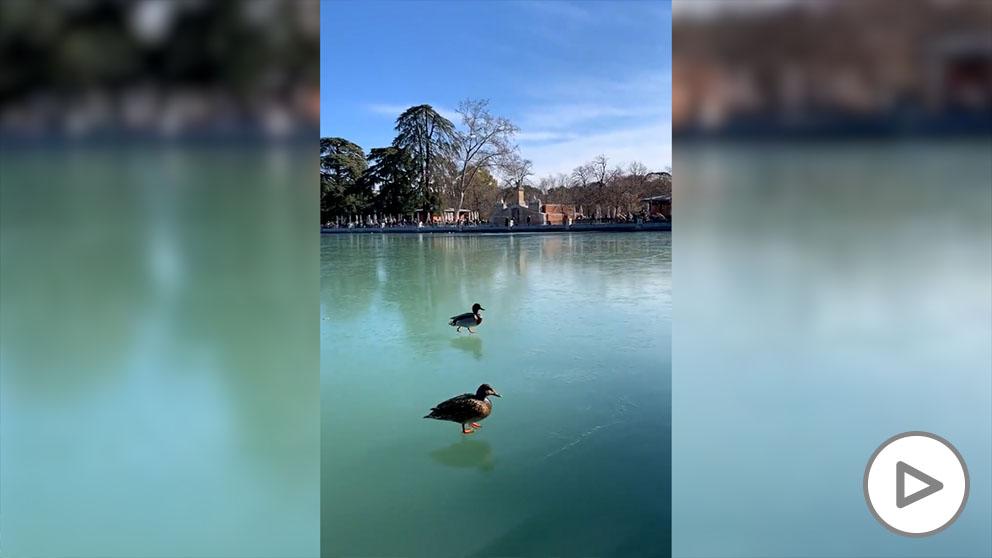 Patos caminando sobre las aguas en el Retiro