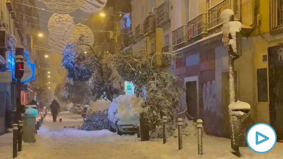 El temporal de nieve provoca la caída de árboles en Madrid