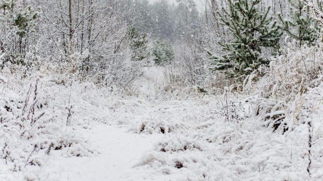 Refranes de nieve