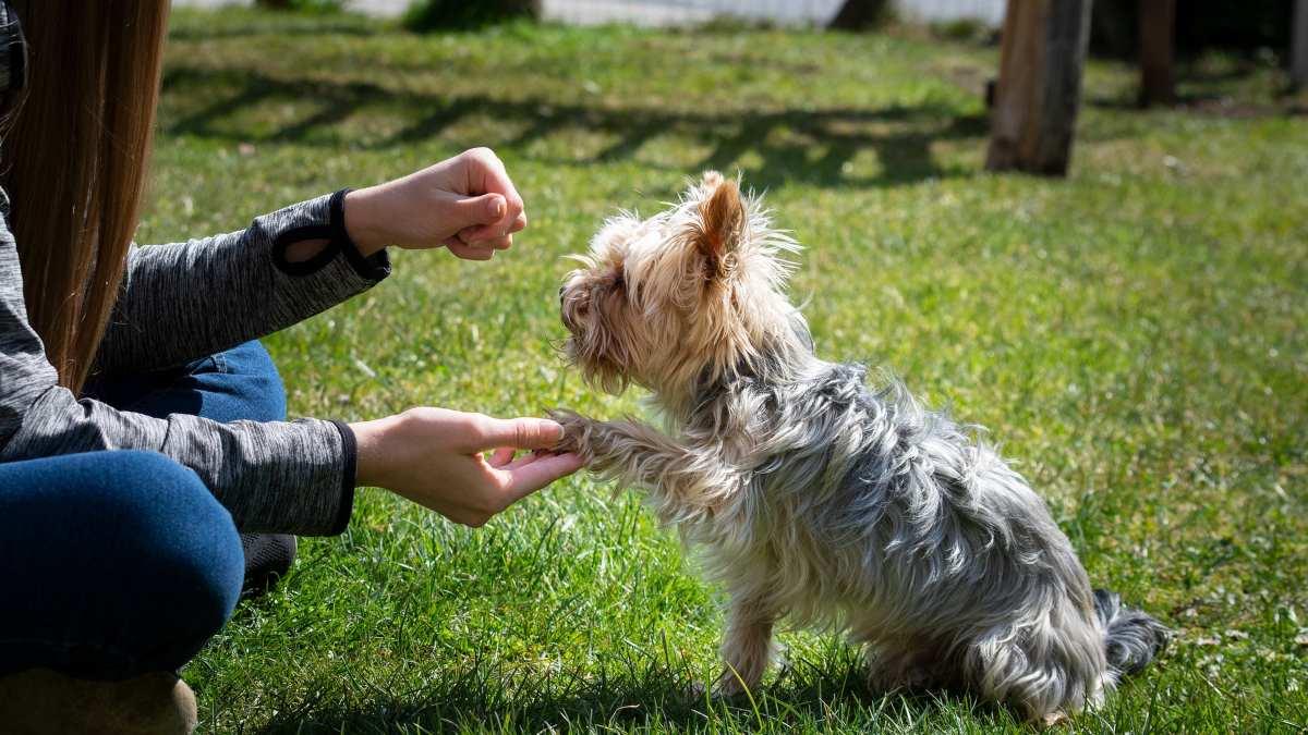Enseñar truco a perro