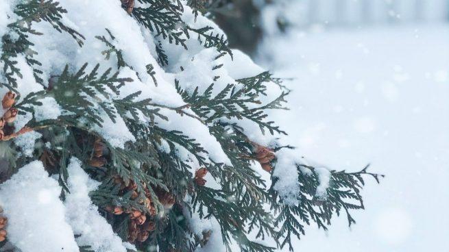 Curiosidades de la nieve