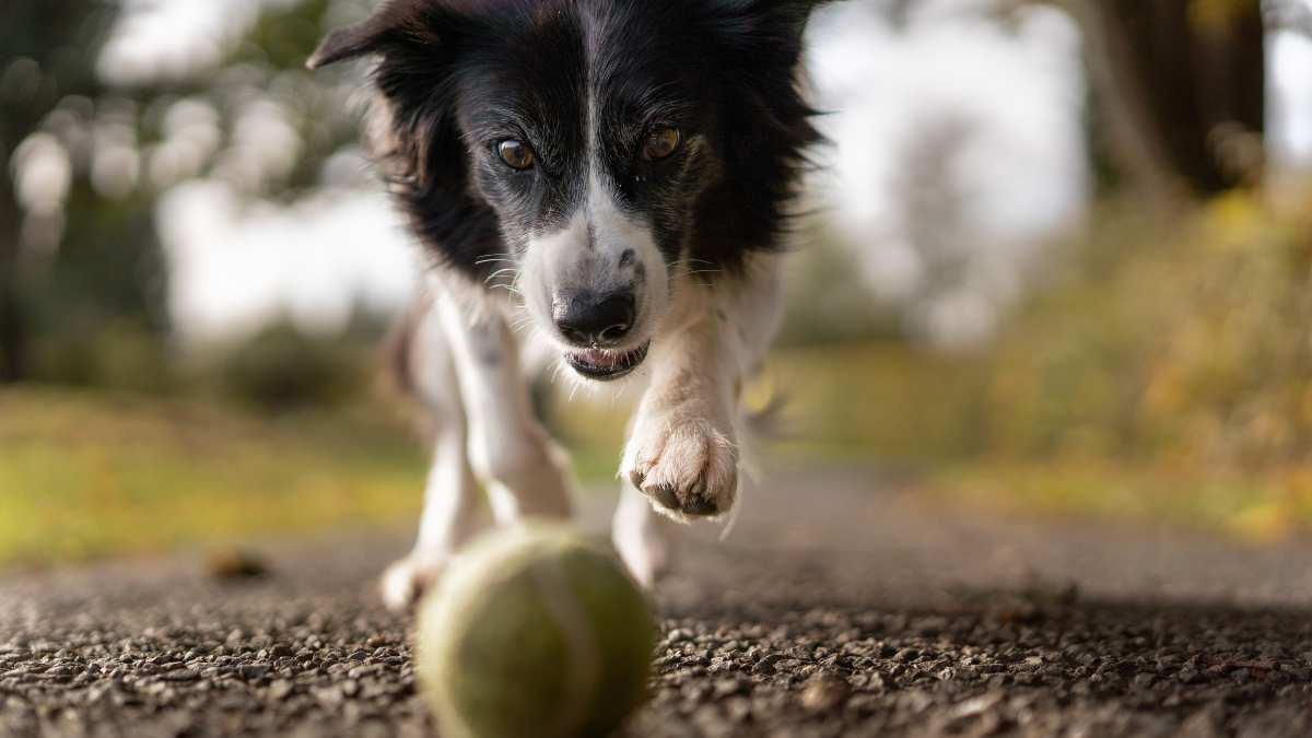 Comportamiento perro